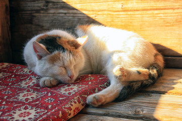 white spotted cat napping on a mat on a wooden porch on a sunny