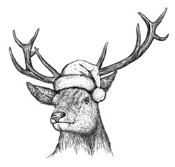 Aluminium Prints Christmas deer, black and white engrave. Christmas hat.