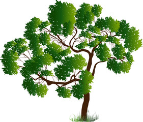 dark green isolated lush tree illustration