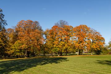 Beautiful landscape - autumn park