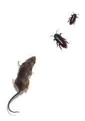 Portrait of a Field Mouse and Two Cockroaches on a White Backgro