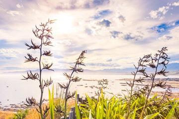 New Zealand flax against the sunset harbour view