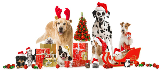 Weihnachtstiere - Christmas Pets