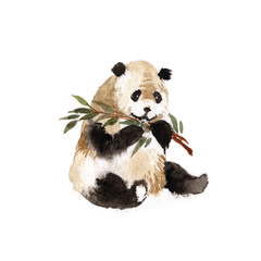 Sitting panda with bamboo isolated on white background
