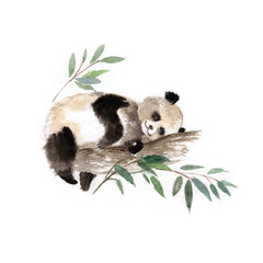 Giant panda bear sleeping in tree, watercolor