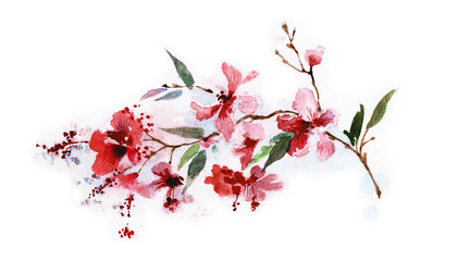Branch of red flowers isolated on a white background, watercolor