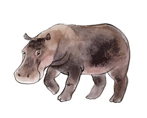 Hippo isolated on a white background, watercolor