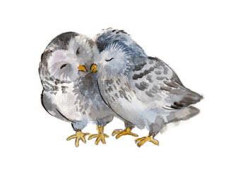 Two polar owls isolated  on a white background, watercolor