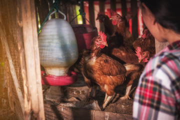 a woman gathering fresh eggs at hen house in countryside morning