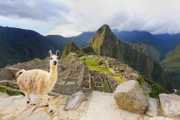 Aluminium Prints Lama Llama standing at Machu Picchu overlook in Peru