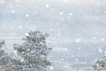 Trees in the snow, snow. Snow, freezing. Christmas, New Year, snowy landscape. Winter background. Copy space.