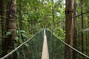 In the jungle of Malaysia