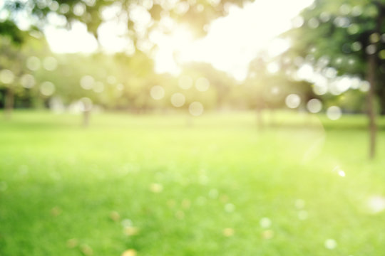 defocused bokeh background of  garden trees in sunny day