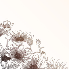 Daisy flowers on a beige background, outline drawing.