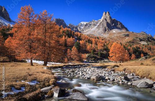 Fotomurales The river Claree and Larch trees in Vallee de la Claree during a clear day in autumn.