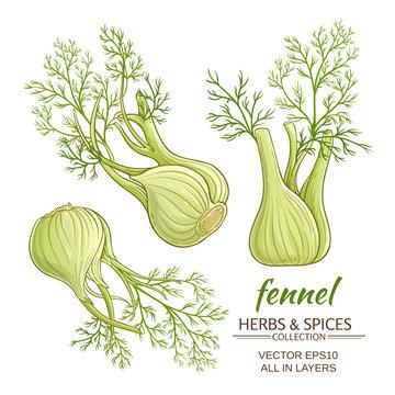fennel vector set