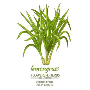 lemongrass vector illustration