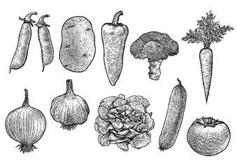 drawing, etching, engraved, vegetable illustration