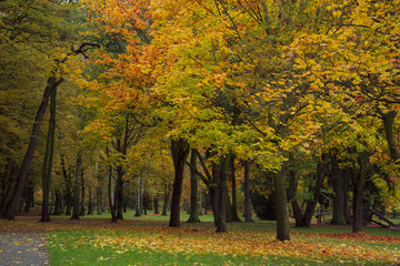 autumn park with trees and leaves  photo. Beautiful picture, bac