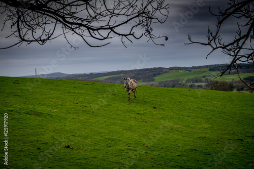 Horse in a countryside landscape