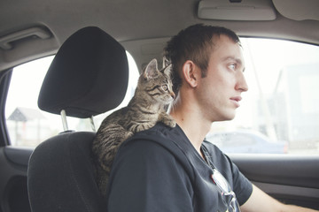 Сat in car. Kitten on driver's shoulder