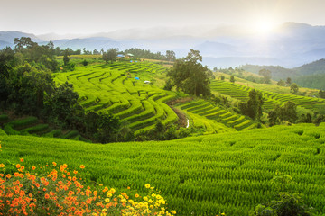 Views of rice terraces, Chiang Mai, Thailand.