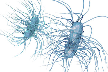 Escherichia coli bacterium isolated on white background, 3D illustration. Gram-negative bacterium with flagella which is part of normal enteric microflora and also causes enteric infections