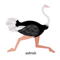 Quick ostrich runs