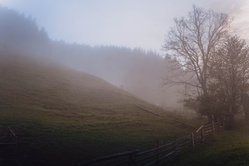 a misty forest in the mountains