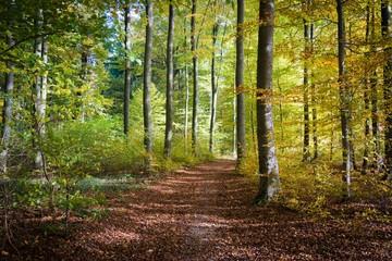 Herbstlicher Wald in Schieder Wall mural