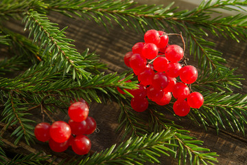 decorative vibrunum
