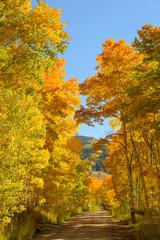 September Gold