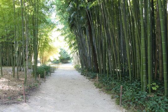 La bambouseraie en Cévennes d'Anduze