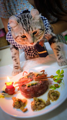 cat .Birthday Cat .a cat was going to blow the birthday cake In the room did not open light