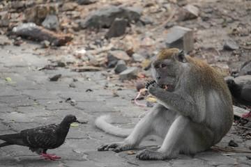 monkey portrait nature. monkey garden in Thailand.