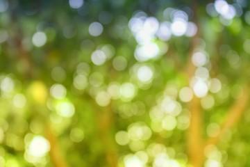 Bokeh natural color background. Color Warm Filter,  leaf of tree