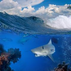 ocean view with bull shark underwater