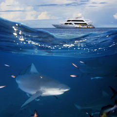 Ocean Wildlife seascape with yacht and shark