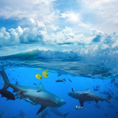 ocean-view in sunlight and angry sharks underwater