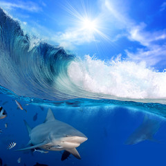 breaking ocean surface in sunlight and angry sharks underwater