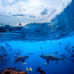 surfer on wave and two wild sharks underwater