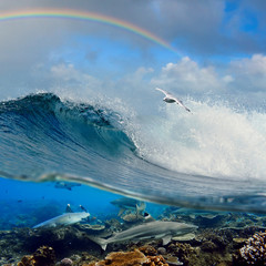 nice surfing wave seagull above and reef sharks underwater