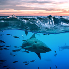 Shark under water line below a wave in blue ocean underwater