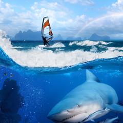windsurfer in ocean rainbow on sky and wild shark underwater