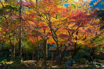 岐阜公園 紅葉