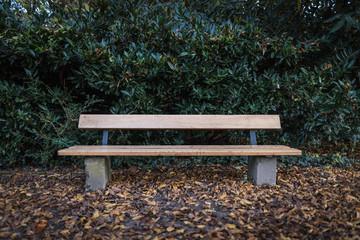 Im Bild: Eine leere Parkbank frontal fotografiert mit Laub auf dem Boden vor einem begrünten Hintergrund .