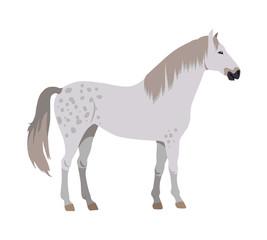 Horse Vector Illustration in Flat Design