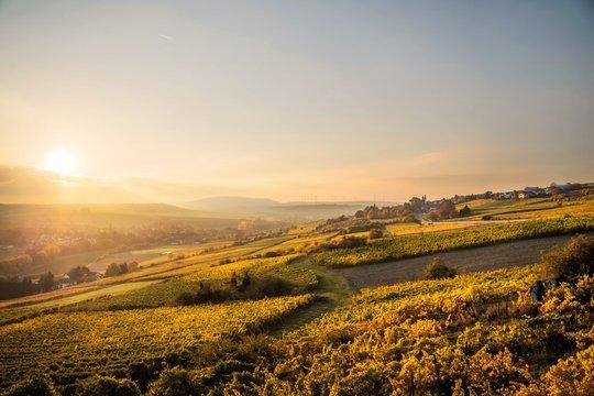 Golden German Vineyards #2