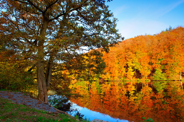 Autumn tree stands by the lake.