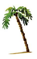 Watercolor illustration of palm